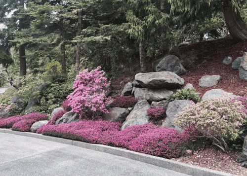 Boulders and Plants