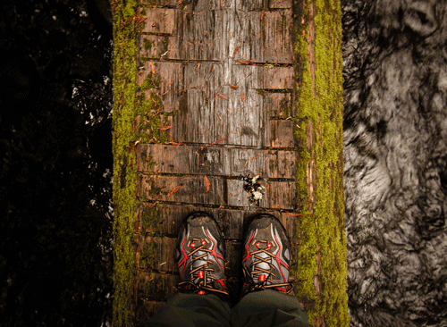 Hiking in the PNW O.N.P., WA By Melinda Schroeder