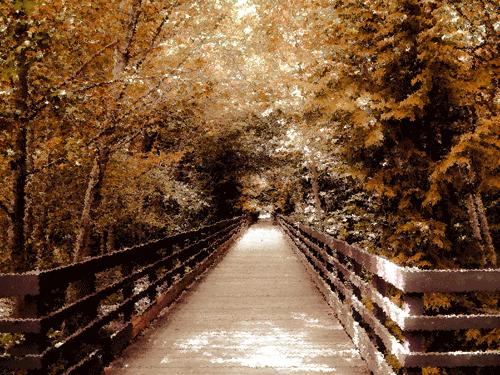 Bridge in Autumn Sequim, WA By Steffany Barber