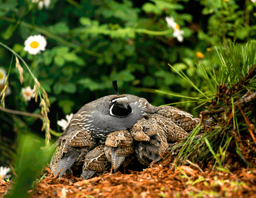 A Mother's Love Sequim, WA By Patrice Sanders